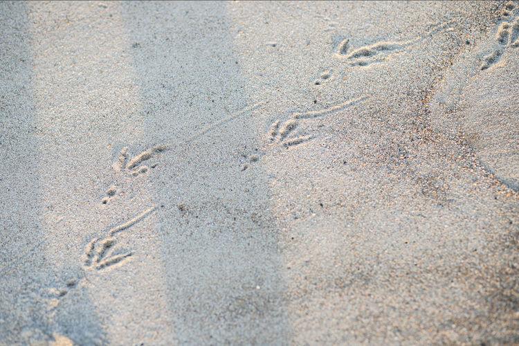 Japan Photography ASIA Asian  Japan Japan Photography Meer Sea Wall Beach Bird Birds Breakwater Hagi Ocean Sea Summer