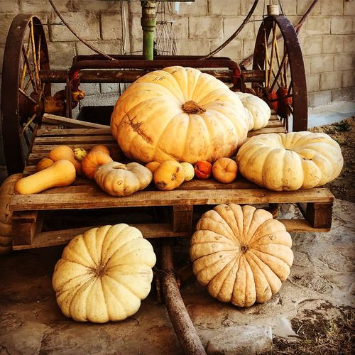 Pumpkins Farm Life Food Pumpkin Healthy Eating Freshness Vegetable