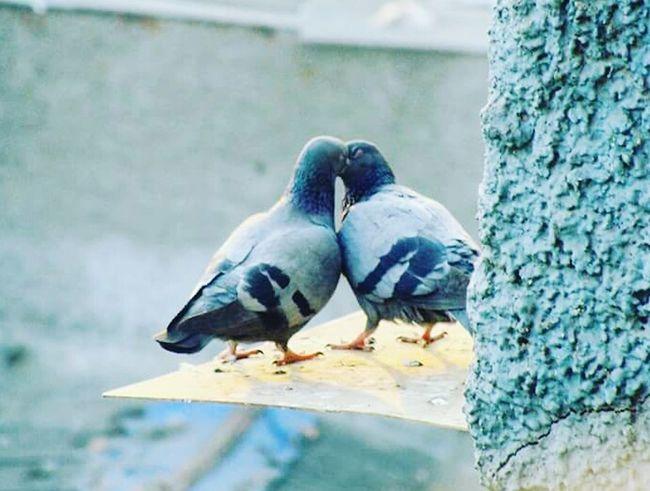Bird Photography Outdoors Nature Bird Love Close-up
