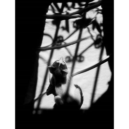 Blackandwhitephotography SocialDocumentary Cat Monochrome Lensculture Magnumphoto