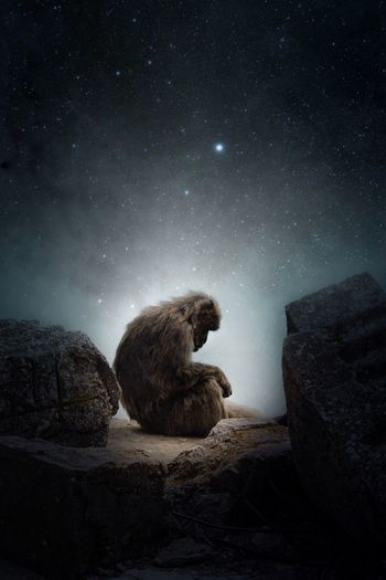 Side view of monkey sitting on rock against star field