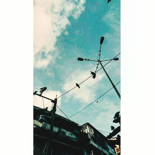 Fly as high as u can n be free to do watever u like Sky Outdoors Bird Low Angle View Cloud - Sky First Eyeem Photo