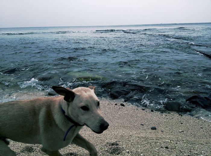 绿岛 伴游狗 Pet Dog