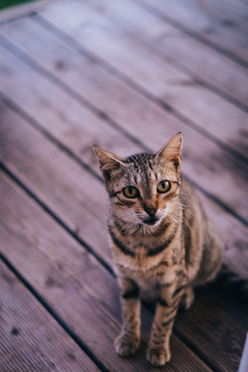 Close-up portrait of cat siting on wooden floor