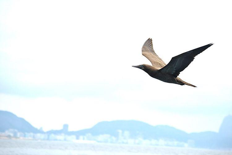 Nature Wildlife Avesmarinhas Natureza