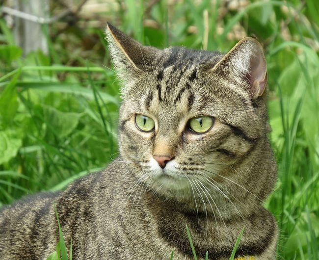 Miss Zouli Cats