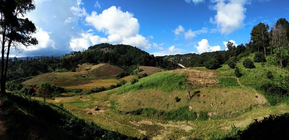 Cloud - Sky Agriculture Landscape Sky Nature Field Rural Scene Outdoors Tranquility Beauty In Nature Day Scenics Mountain Rice Paddy Terraced Field Tranquil Scene Thailand🇹🇭 Mae Salong Chiang Rai, Thailand Trail Running MST2017