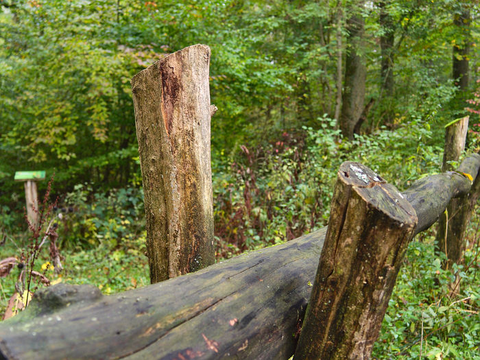 Close-up Day Growth Nature No People Outdoors Plant Sunlight Tree Tree Trunk Wood - Material Wooden Barriers