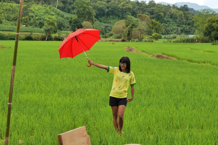 Woman Holding Red Umbrella While Standing At Rice Paddy
