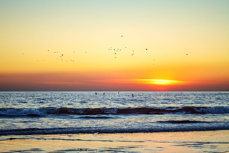 Last light Sunset Sky Water Beauty In Nature Orange Color Scenics - Nature Nature Animal Themes Idyllic Animal Vertebrate Animal Wildlife No People Horizon Over Water Tranquil Scene Tranquility Bird Group Of Animals Sea Beach