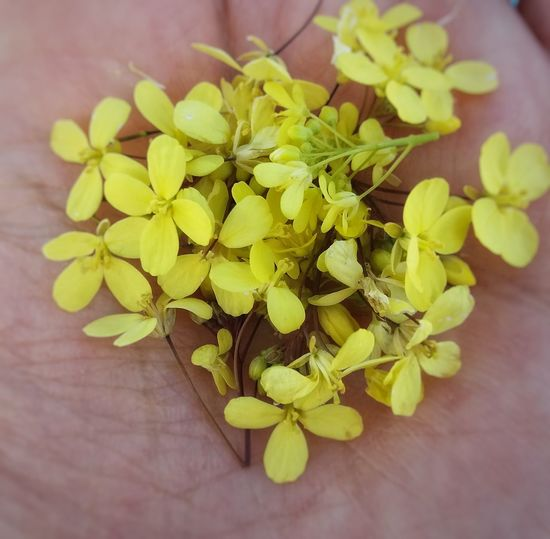 Small yellow
