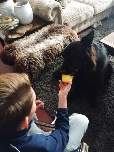High Angle View Of Teenage Boy Feeding Dog