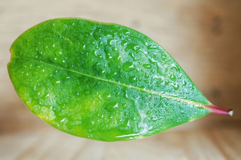 High angle view of wet leaf on table
