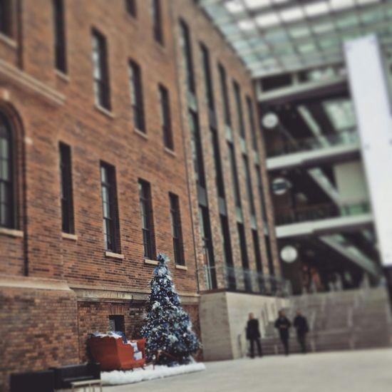 MaRs Building Historical Building Toronto Queenspark College And University Brickwall Christmas Tree Chrismas Xmas Tree