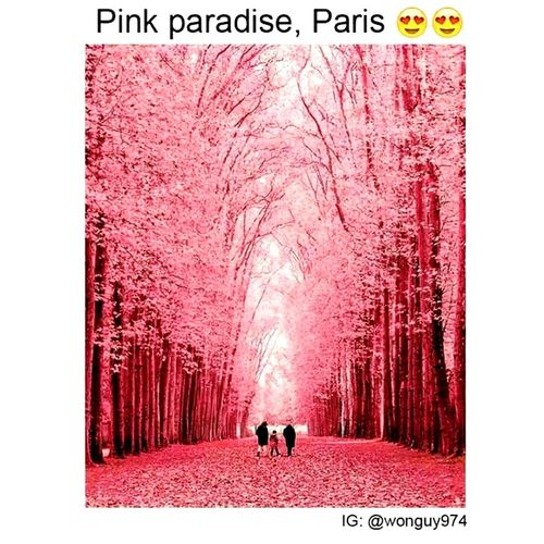 Paris, France  Pink Paradise😍