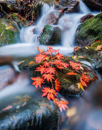 High angle view of autumn leaves on rock amidst stream