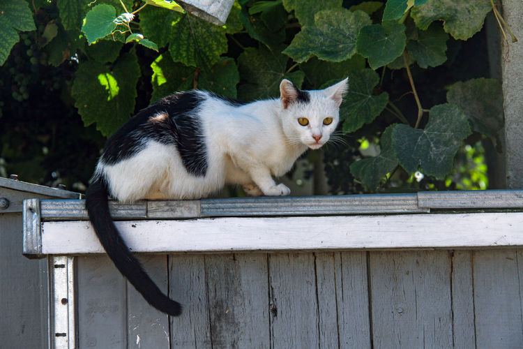 Delta Danube Sulina Animal Themes Cat Cat On The Fence Day Domestic Animals Domestic Cat Feline Looking At Camera Mammal No People One Animal Outdoors Pets Portrait Sitting