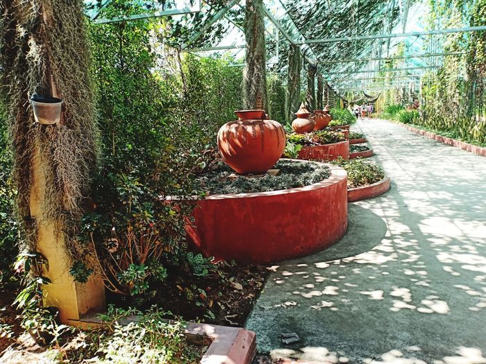 Potted plants in park