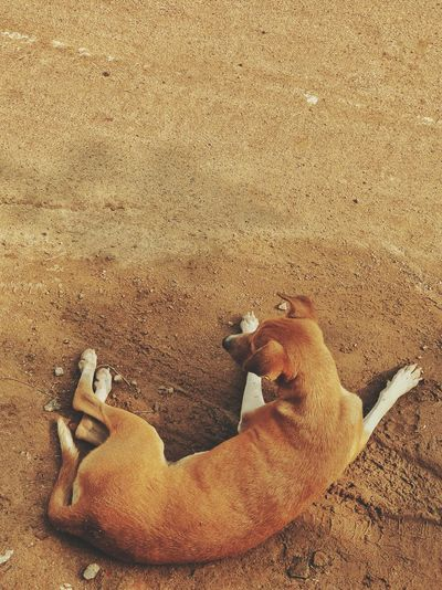 Pets Of Eyeem Petslife Pet Dog Dogs Of EyeEm Dog Love Dogstagram Prespective India Sunlight Shadows & Lights Outdoors Afternoon Road Brown Brownie Oneplus Puppy Beach Sand Lying Down Relaxation Close-up EyeEmNewHere