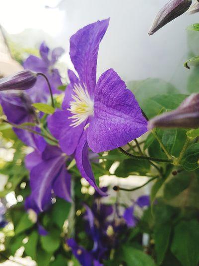 blumen Flower Head Flower Purple Petal Springtime Close-up Sky Plant