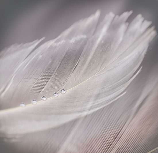 Close-Up Of Feather With Water Drops