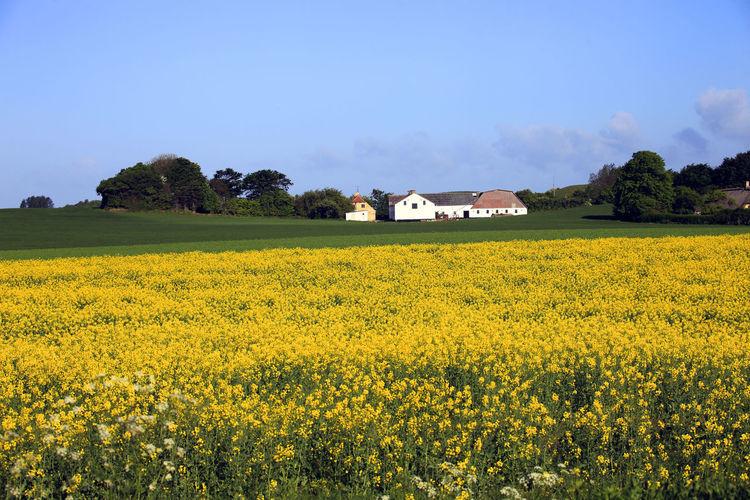 Denmark Field