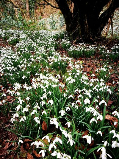 Snowdrop Valley Landscape Photography Beauty In Nature Green Color Woods