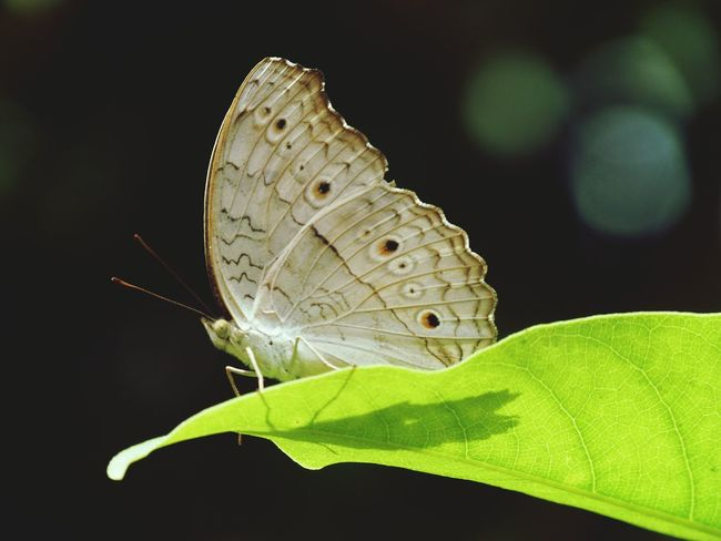 Butterfly ready to fly... India