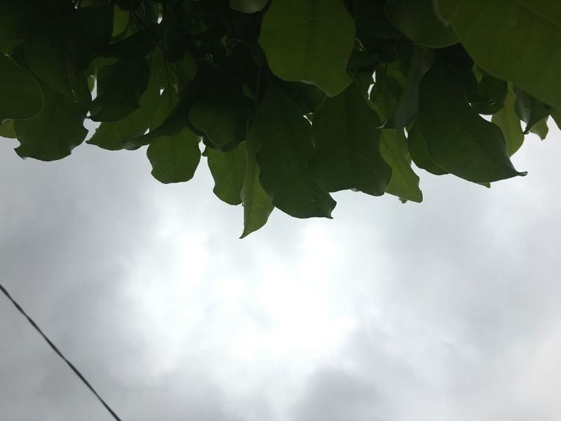 Abyss Cloudy Eyeemphotography EyeEmNewHere TheWeekOnEyeEM Outdoors Nature Tree No People Cloudy Sky Black Clouds Plant Leaves LINE Grey Green