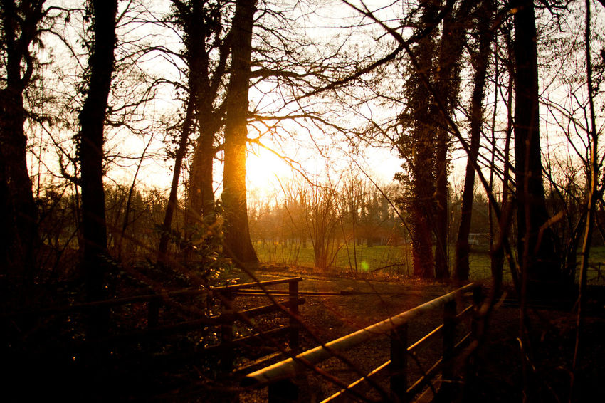 Beauty In Nature Day Forest Landscape Nature No People Outdoors Sky Sunset Tranquil Scene Tranquility