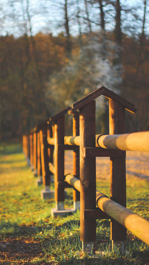 View of wooden fence on field in forest