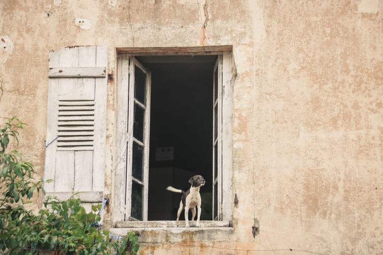 Dog in front of building