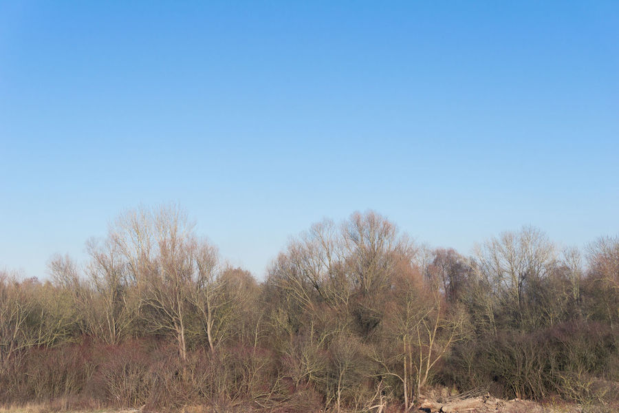 Trees in front of a clear Sky Clear Colourful Front View In Front Of Landscape Morning Nature Outdoor Sky Treetop Treetops Tres Winter