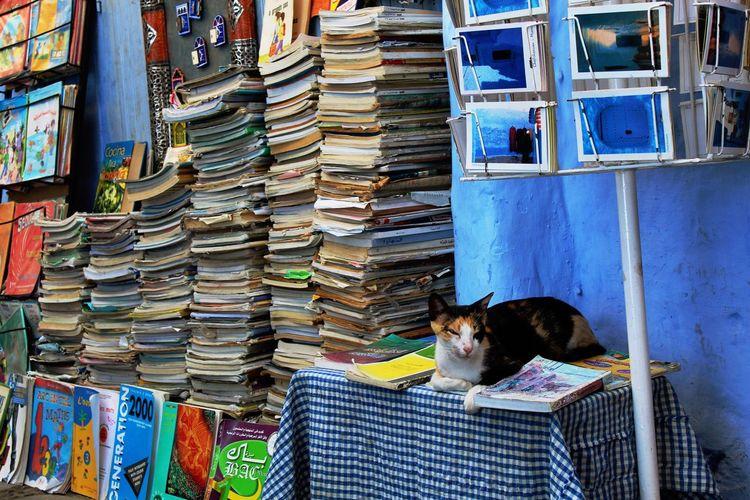 Portrait of cat sitting on books in shelf