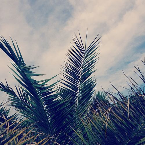 #summer #palm