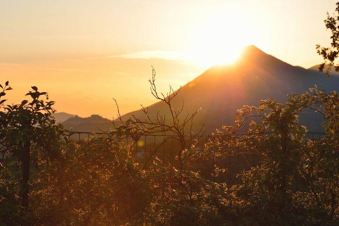 Oltre la siepe il sole tramonta sul monte Monte Taburno Siepe Rincospermum Tramonto Sera Luce E Ombra Montesarchio Sole Montagna Provincia Di Benevento Campania Sannio