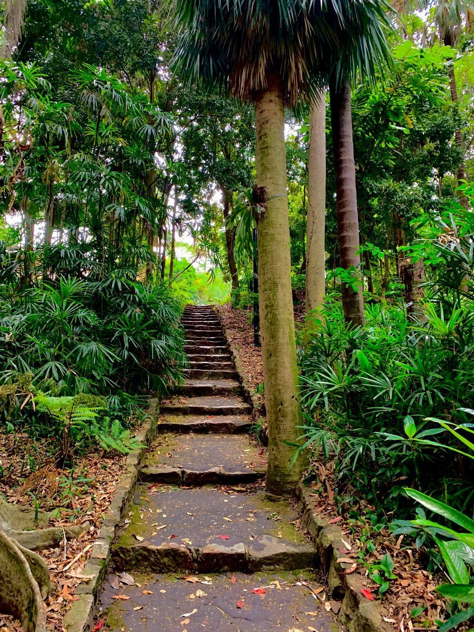 STEPS LEADING TOWARDS FOREST
