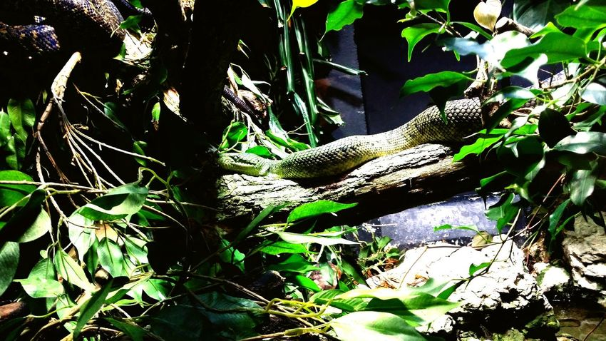 Well, I love animals, even the snakes! ? Snakes Zoo Sassy London
