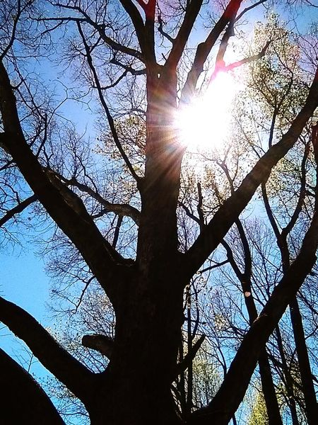 Tree Sunbeam Low Angle View Sunlight Lens Flare Sun Branch Nature Silhouette Sky Tree Trunk Day Outdoors Forest No People Beauty In Nature Sunlight Green Color Park Different Perspective Close-up Differentoutlook Beauty In Nature OutOfFocusPerfection Shadow