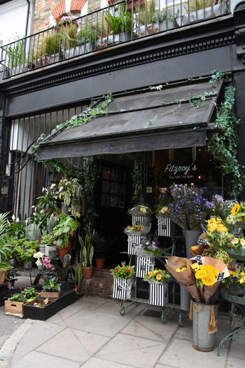 Potted plants at store for sale
