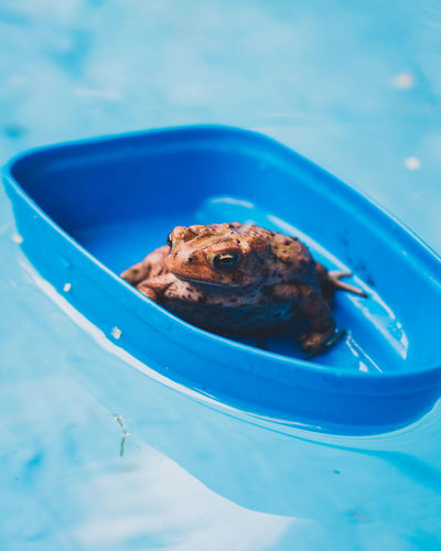Amphibian Blue Childhood Close-up Day Nature No People Outdoors Swimming Pool Taking Photos