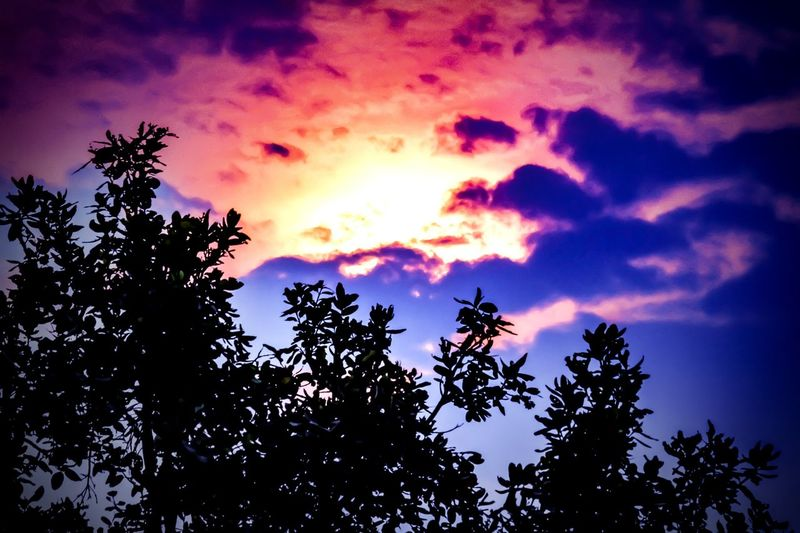 Relish the winter's Sunset is the best way to take Adrenaline at Twilight Adrenaline Rushing Through My Veins  Twillight Low Angle View Sky Nature No People Outdoors Sunset Beauty In Nature Tree Area