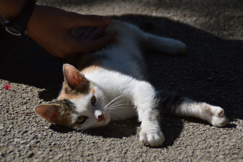 Cropped Hand Of Man Petting Cat Lying On Street