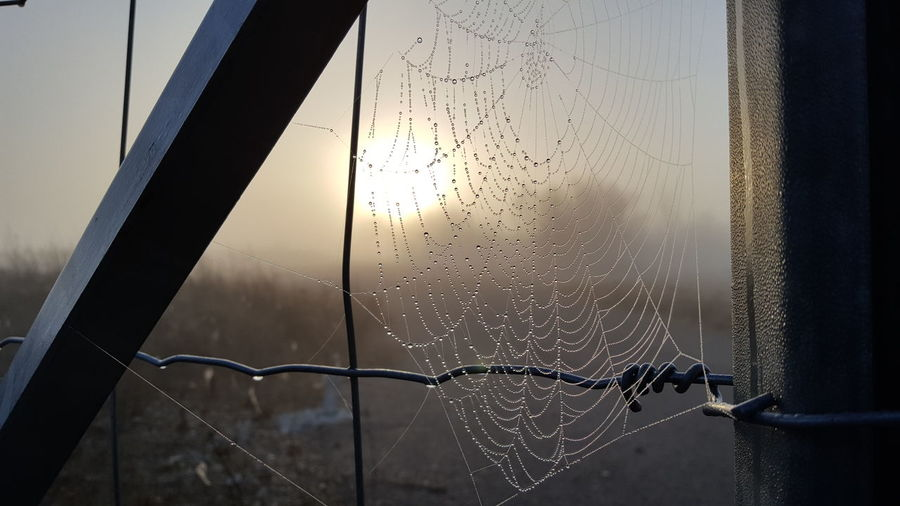 Close-up of wet spider web in rainy season
