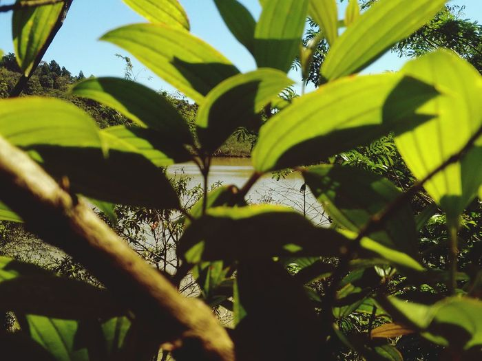 Belezanatural Green Nature_collection EyeEm Nature Lover Beautiful Nature Brazil Lake Leaves