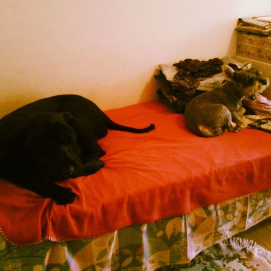 La bella vita <3 Spike Stella Love Dogs