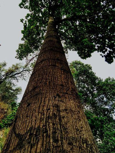 Cerro Santa Lucia Chile2018 Landscape Treeframing Nature Photography Scenery Treeshunter View ViewfrOmbeLOw EyeEmNewHere Tree Branch Tree Trunk Sky Close-up Textured  Farmland Single Tree