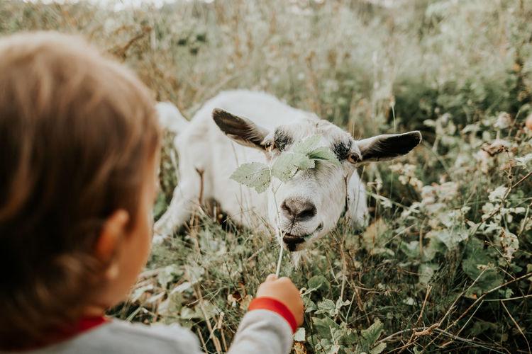 Cute girl feeding plant to goat