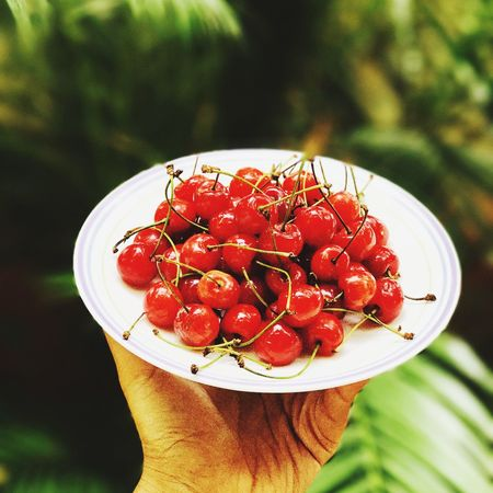 Cherries Red Cherries Seasonal Fruits Little Joys Of Nature Human Hand Human Body Part Food And Drink Freshness Focus On Foreground One Person Food Stories Holding Close-up Fruit Healthy Eating Outdoors Ready-to-eat Beauty In Nature