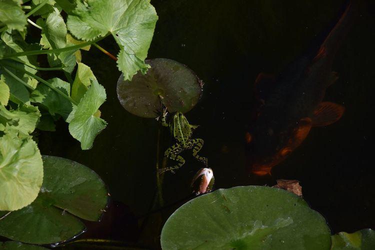 Close-up of pond